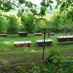 Včelnice pod Bílou horou. Léto 2016.